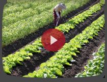ふるさと納税 赤村商品PR動画