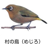 村の鳥 メジロ|福岡県田川郡赤村