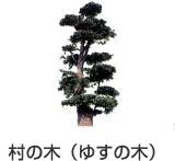 村の木 ゆすの木|福岡県田川郡赤村